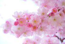 kwiaty do ogrodu